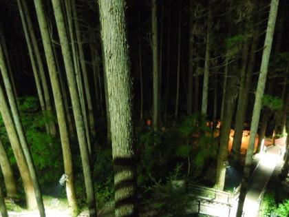 鍋ヶ滝 ゴールデンウィークライトアップ